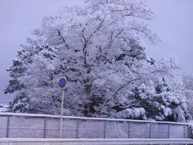 和歌山に久し振りの積雪